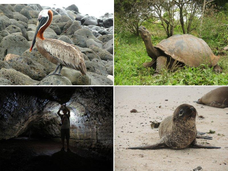 large_Galapagos3.jpg