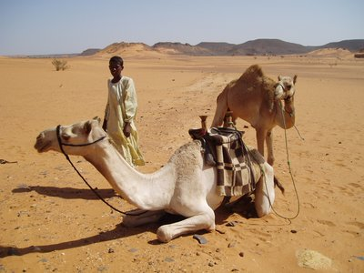Camel Ride Anyone?