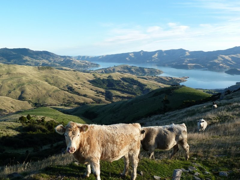 Blick über die vulkanische Halbinsel Banks Peninsula