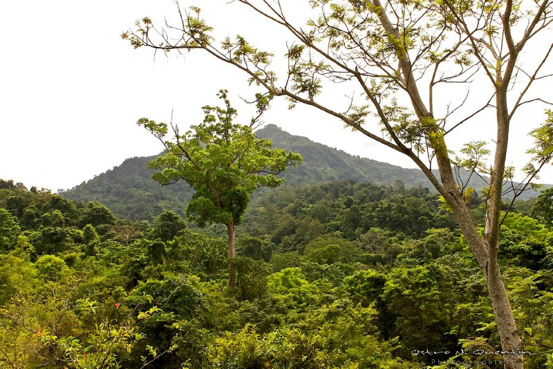 large_Khao_Yai_Tha_2011_59.jpg