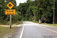 ROAD OF KHAO YAI JUNGLE
