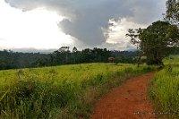 LANDSCAPE OF KHAO YAI JUNGLE