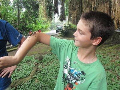 Spider on Tom's arm