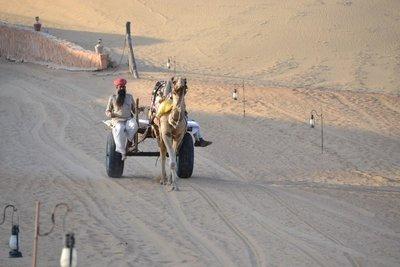Khimsar camel driver