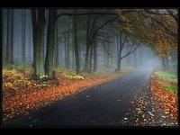 Czech in Autumn