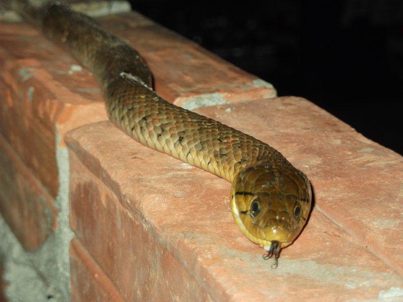 Snake at hope