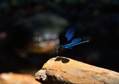 Winged companion