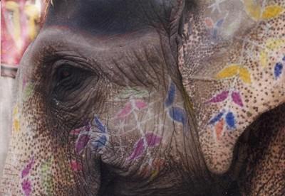 161284-An-elephant-never-forgets-0.jpg