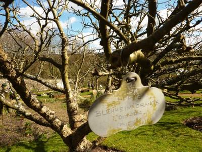 Hughenden_Apples_WalledGarden.jpg
