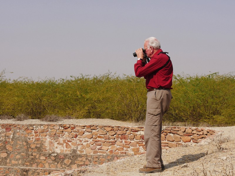 David looking for the owl near Tal Chhapar
