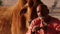 Pushkar_Contemplation by man and cow near Sunset Cafe