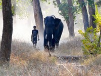 Bandhavgarh_A park ranger taking his elephant for a walk