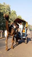 Agra_A camel bus