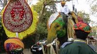 The elephant awaited the groom's arrival