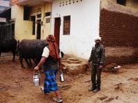 Varanasi_Buffaloes and the wall of dung