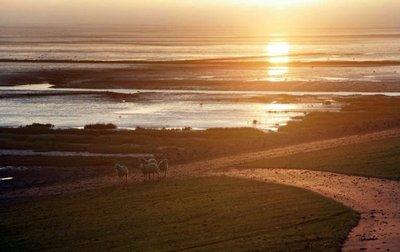 Schleswig Holstein Wadden Sea National Park