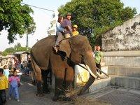 Riding Elephant in Yogya Square