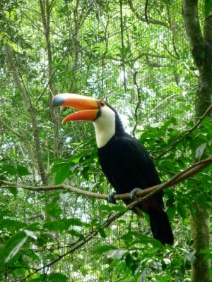 The toucans were super playful and definitely not shy