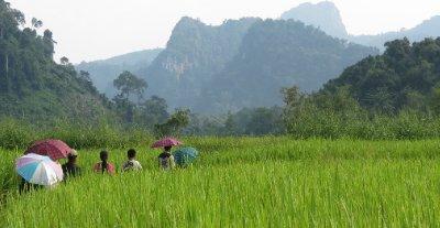 Rice paddies and krasts
