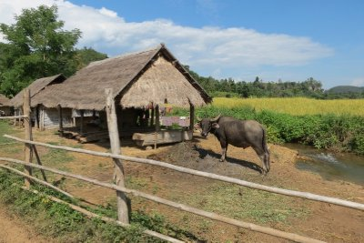 Rural villages, buffalos and all