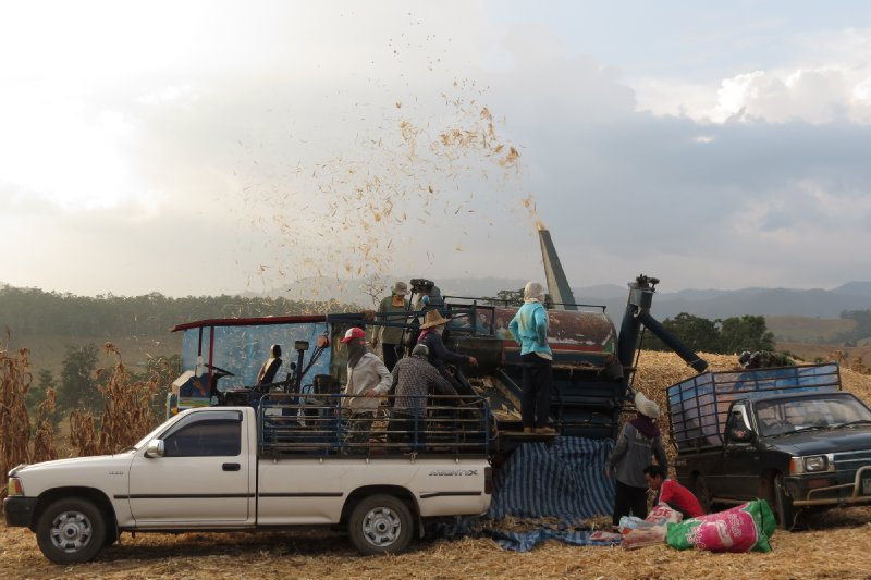 Scenes from the country, corn harvest time