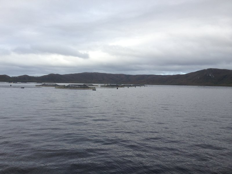 Trout and Salmon Farms
