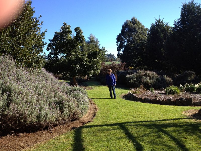 Lawns of the Lavendar and Berry farm, Pemberton WA