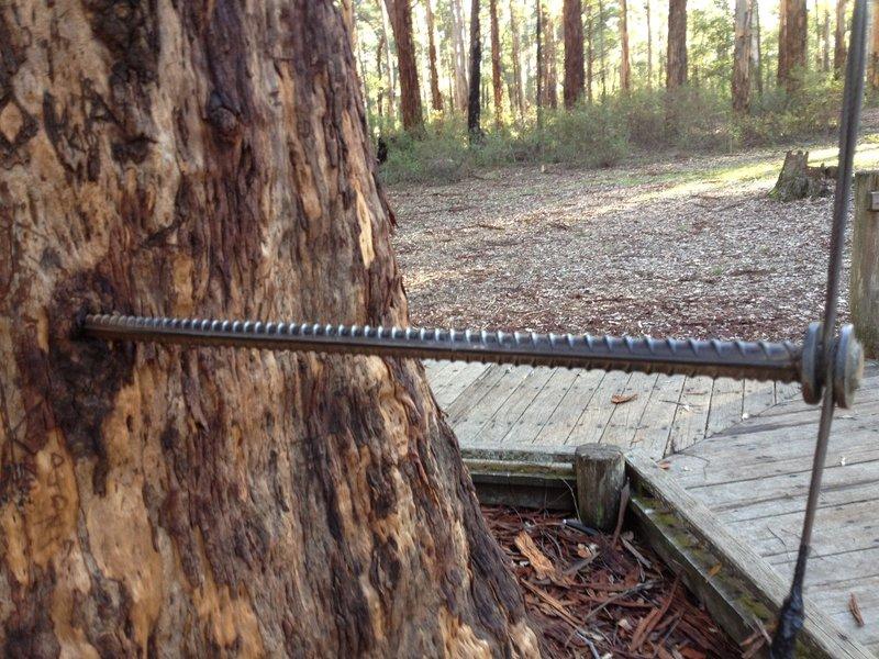 One of the steel pins in the Diamond Tree near Pemberton WA