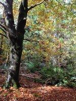 Holleybrook autumn leaves