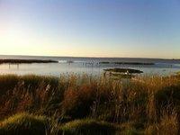 Pelicans on Lake Albert, Meningie