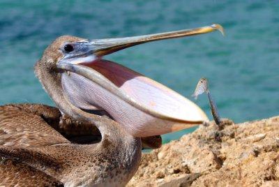 hard to escape this big beak