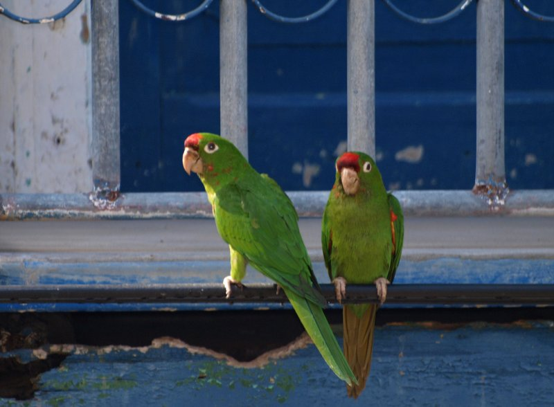 parrots at the balcony