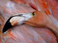 Flamingo/Bonaire
