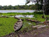 The Lagun in the Jungle