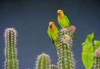we love fresh cactus seeds