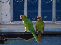parrots at the balcony