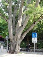 90_Krk_-_Grad_-_Park_2.jpg