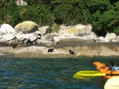 Abel Tasman Nat'l Park 23 -  Tonga Island
