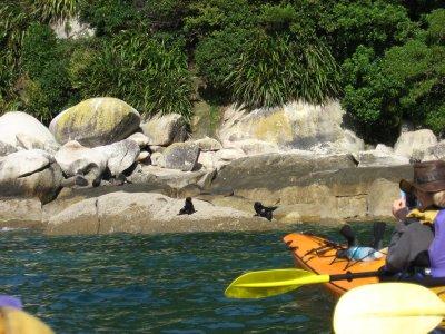 Abel Tasman Nat'l Park 22 - Tonga Island