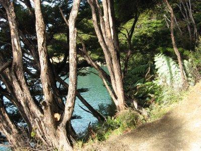 Abel Tasman Nat'l Park 5