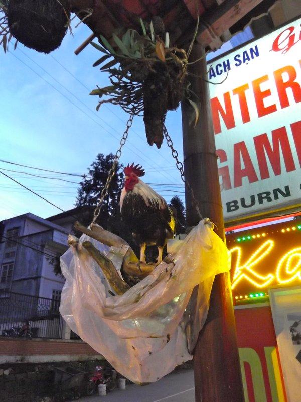 Good Luck Chicken