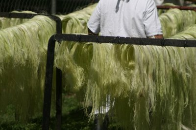 The sisal fiber made of henequen. The Mayan people use this cactii plant to make ropes, clothes etc. It is very strong and durable.
