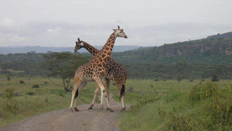 2012 Kenya 1159