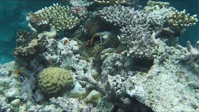 12 Clown Fish