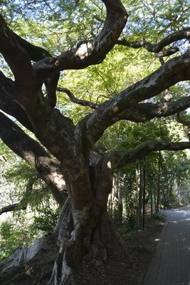 17 Tree 2
