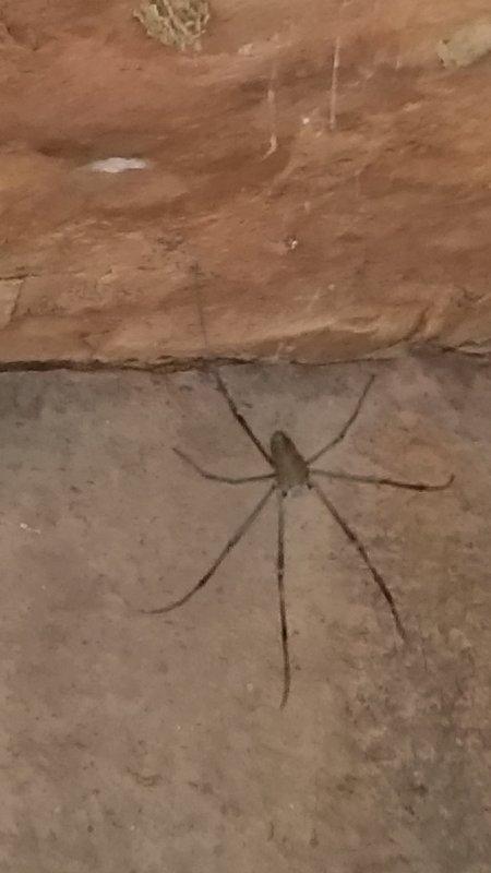 26 Cave Spider