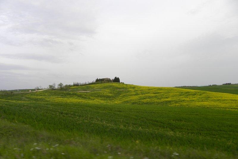 Green fields of Tuscany