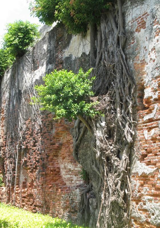large_AnpingBanyonTrees.JPG