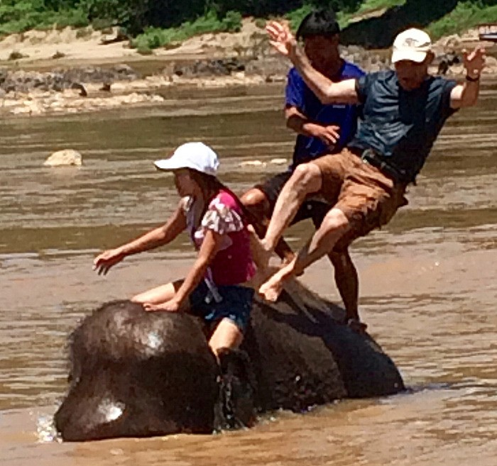 large_Laos_ElephantFalling.jpg