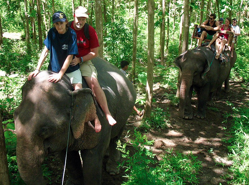 large_Laos_ElephantRideForest.jpg